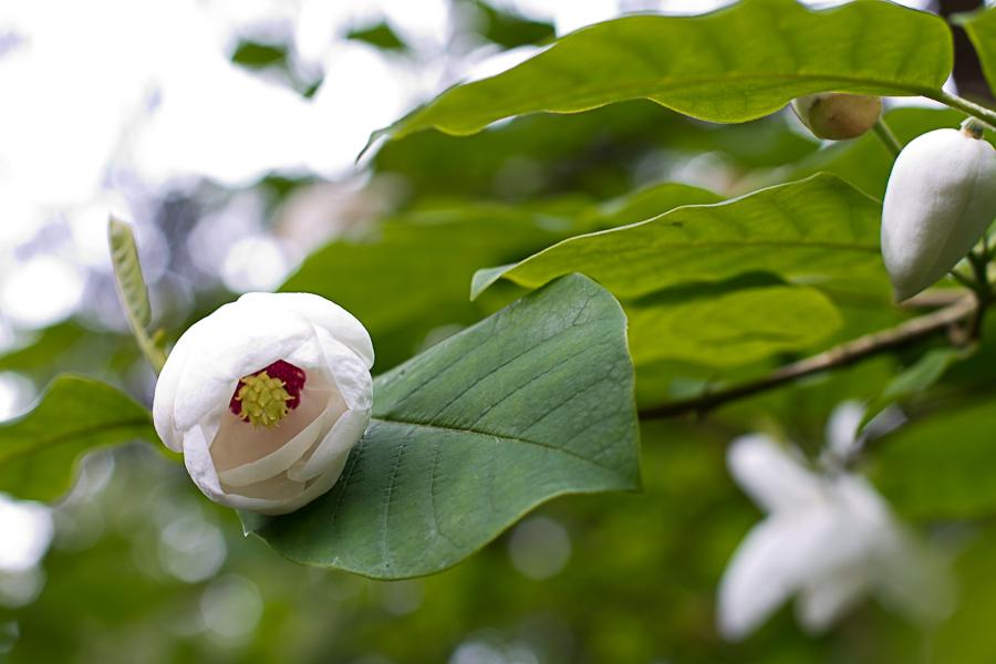 rhododendron garden -17