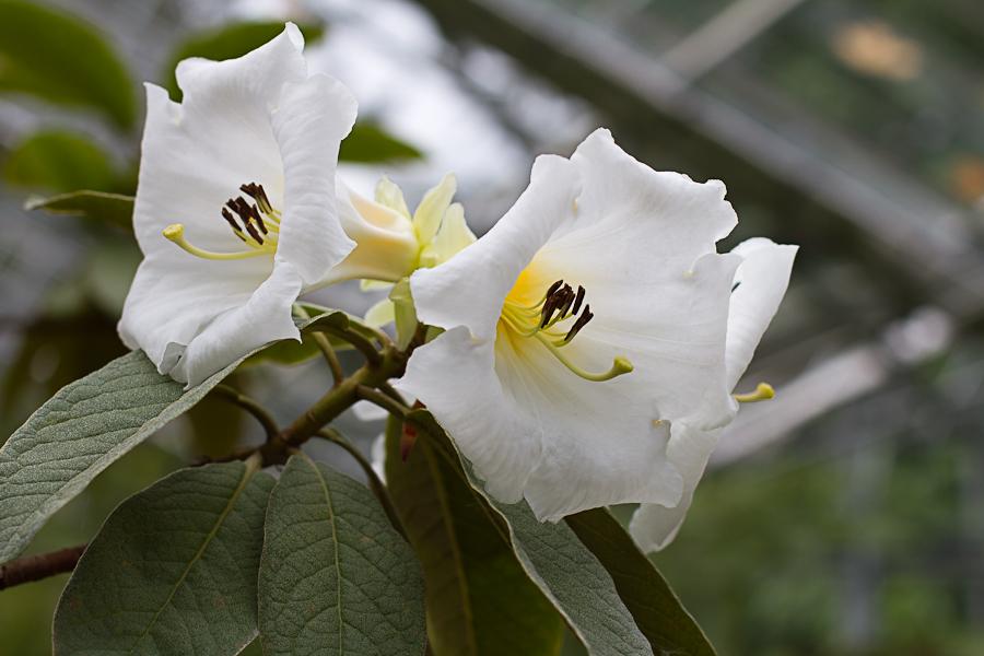 rhododendron garden -21