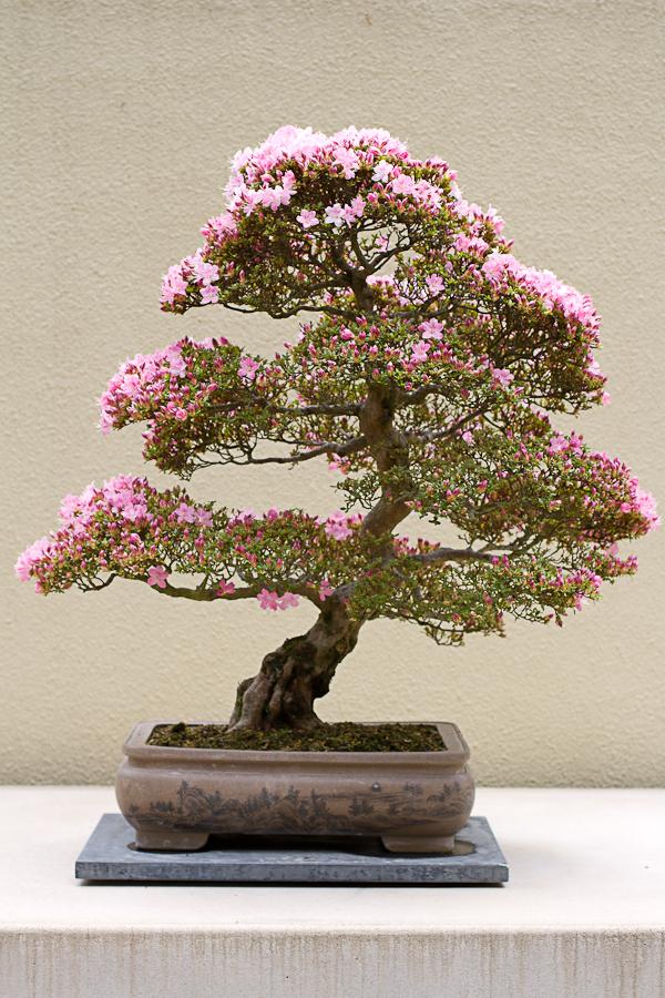 rhododendron garden -24
