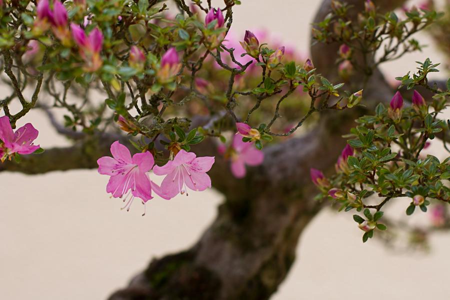 rhododendron garden -25