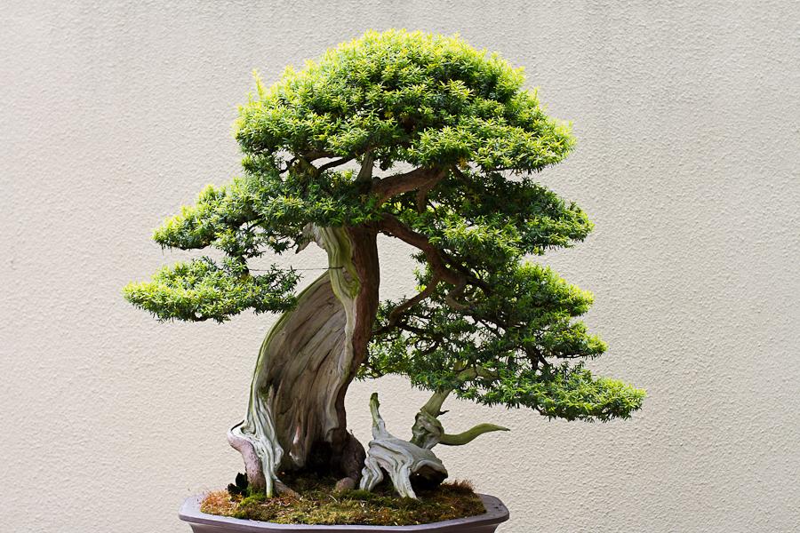 rhododendron garden -26