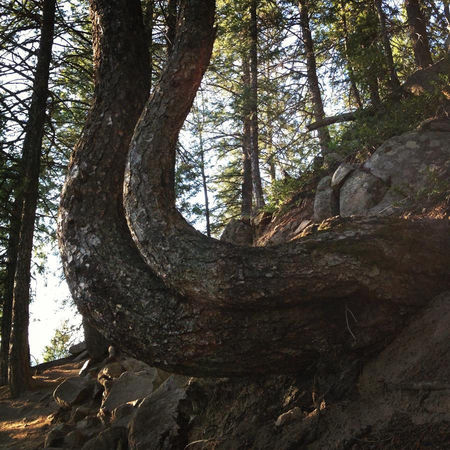 aspen hike at sunrise__iphone_resized-4