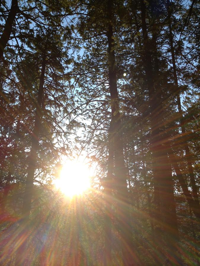 aspen hike at sunrise__iphone_resized-5