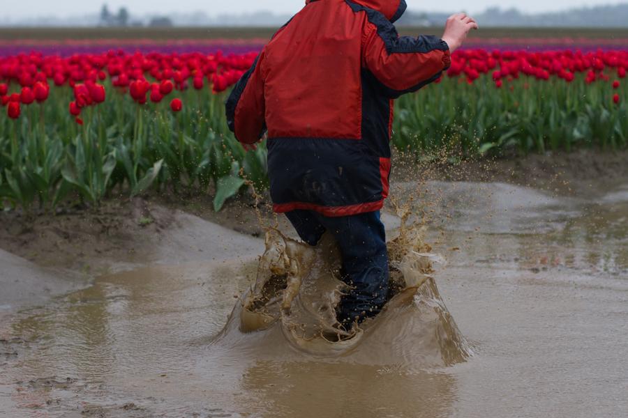 tulip festival-43
