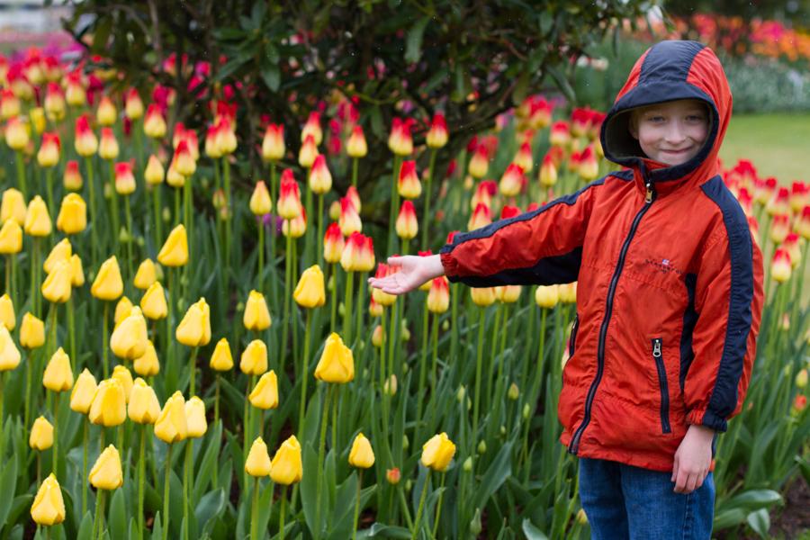 tulip festival-8